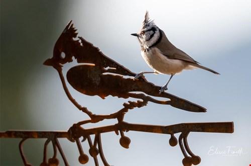 metalbird.de