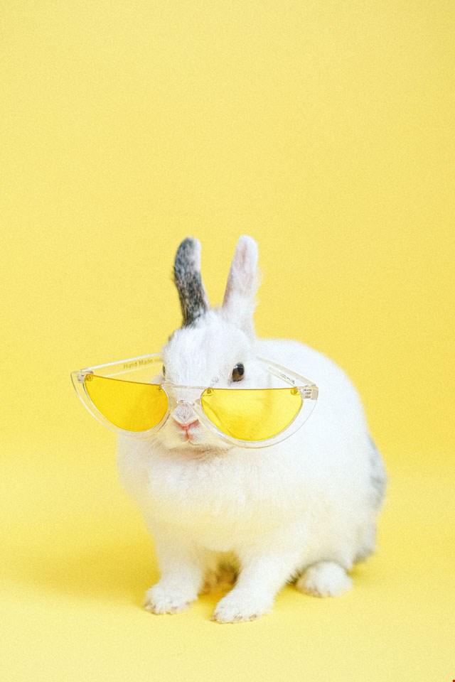 Hintergrund 'cooles Kaninchen'